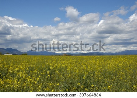 Field of flowers in with trees in Vilanant Girona Spain - stock photo