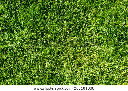 field of fresh green grass texture as a background, top view, horizontal - stock photo