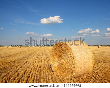 Field of freshly cut bales on farmer field - stock photo