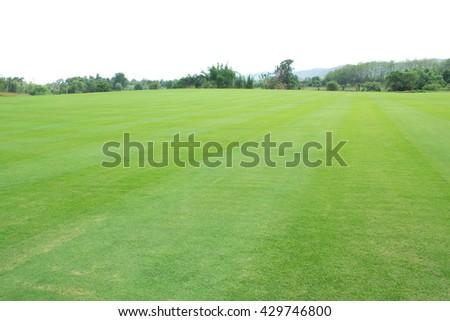 field of grass  - stock photo
