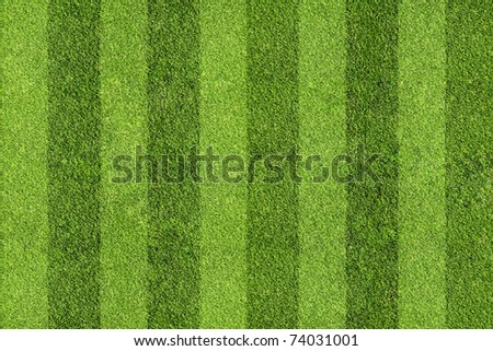 field of grass - stock photo