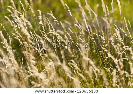 field of grass against sunset light - stock photo