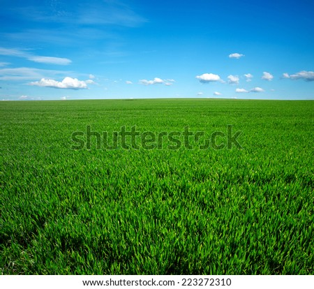 field of grass and perfect blue sky - stock photo