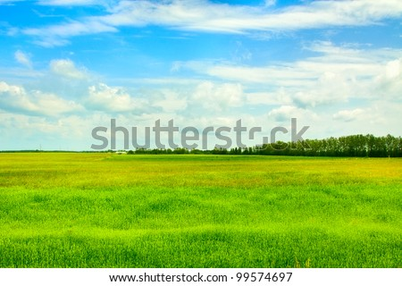field of grass and perfect sky, Belarus