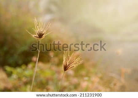 field of grass during sunrise