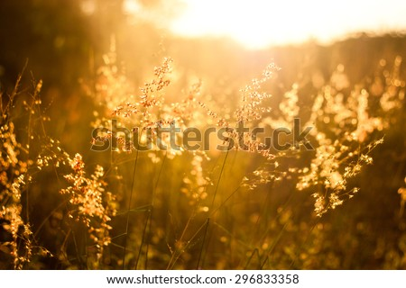 field of grass during sunset ,vintage tone - stock photo