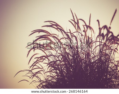 field of grass during sunset with filter effect retro vintage style - stock photo