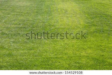Field of grass in a neighborhood park - stock photo