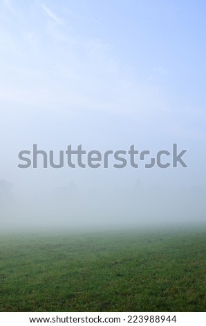 field of grass in misty morning - stock photo