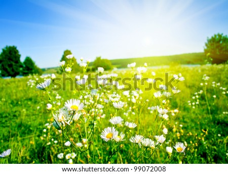 field of grass. meadow green under sky - stock photo