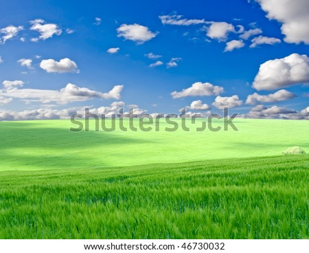 field of grass. meadow green under sky backgrounds