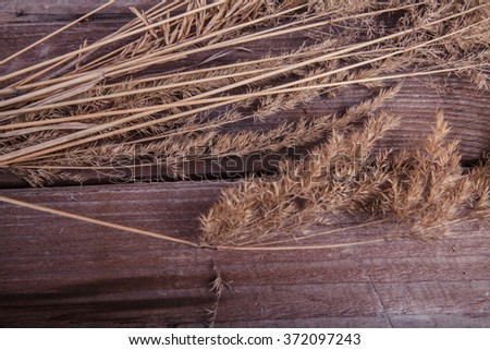 field of grass on a wooden background