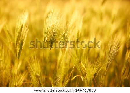 Field of grass on sunset. Nature background - stock photo