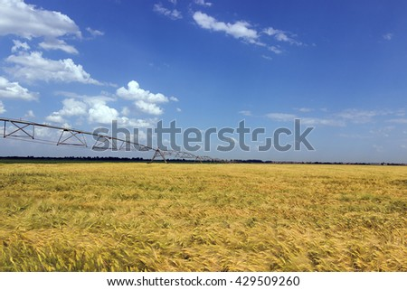 Field of green barley Green wheat field and sunny day - stock photo