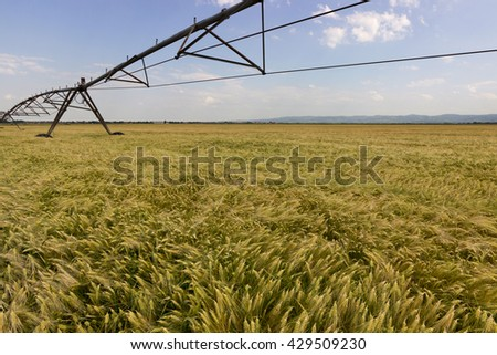 Field of green barley. Sprinkler system crops. Industrial irrigation equipment on farm field Green wheat field and sunny day