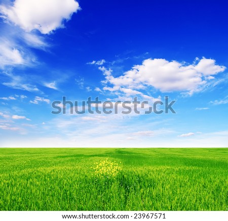 field of green grass and blue cloudy sky - stock photo