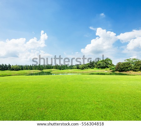 field of green grass and blue sky in summer day
