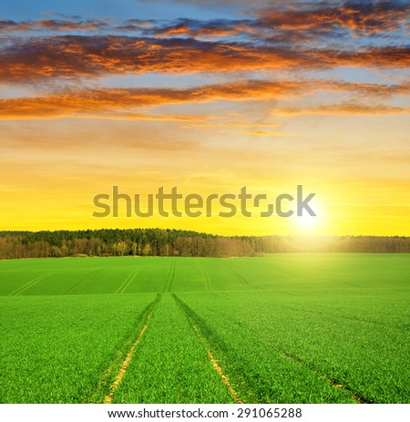 Field of green grass and bright sunset.