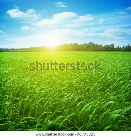 Field of green grass and bright sunset - stock photo