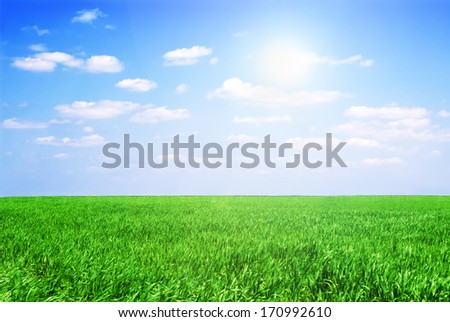 Field of green grass and perfect sky