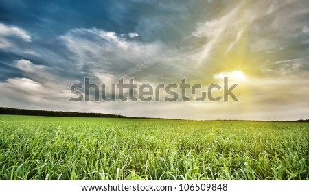 Field of green grass and sky, background