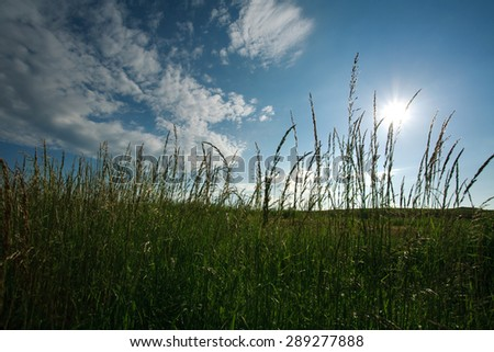 Field of green grass on a background of blue sky and white clouds lighted by the sun - stock photo