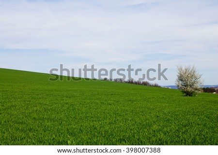 Field of green grass with a blossoming lone tree and blue sky - stock photo