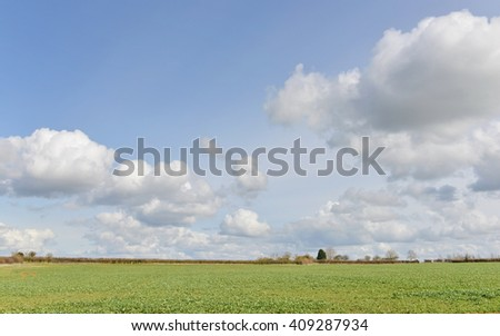 Field of Green Growing Crops with a Beautiful Blue Sky Above  - stock photo