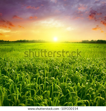 Field of green wet grass and colorful sunset. - stock photo