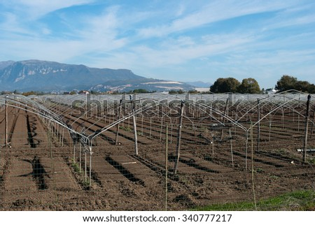 Field of greenhouse prepared for cultivation