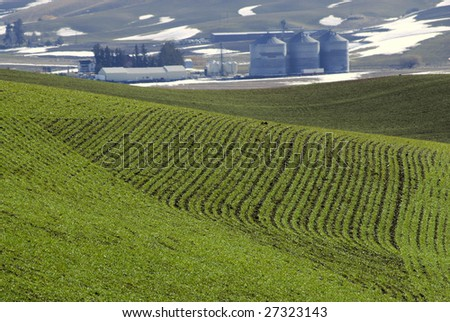 Field of new grain with farm in background