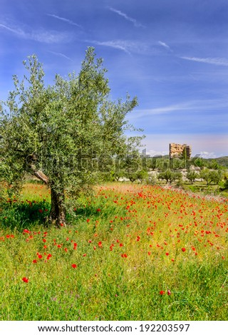Field of Poppies near Agres Village, Alicante Province, Spain