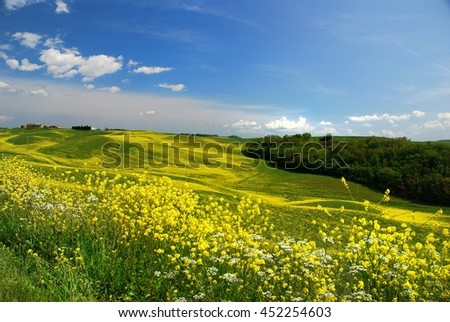 Field of rape near Siena, Tuscany
