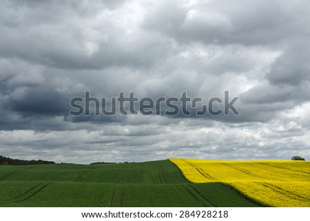 Field of rapeseed and grain in north Poland/ Countryside landscape - stock photo