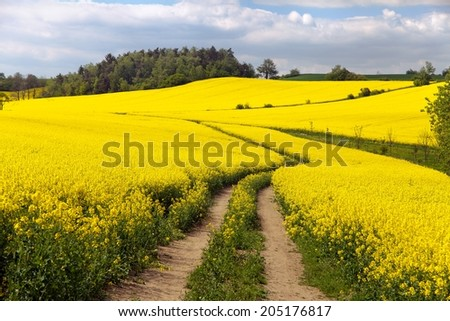Field of rapeseed (brassica napus) - plant for green energy and green industry