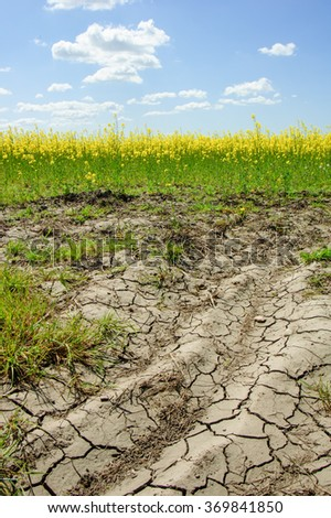field of rapeseed with beautiful clouds and cracked earth - plant for green energy. Global warming. - stock photo