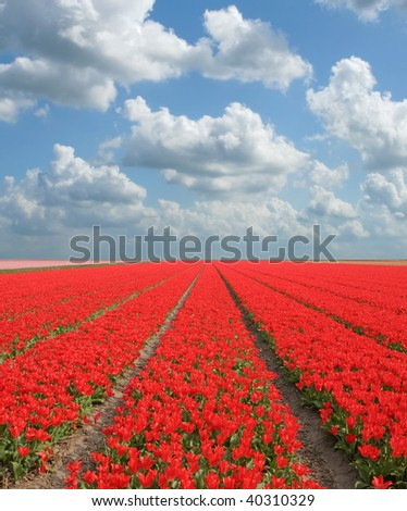 Field of red tulips, blue sky with clouds overhead.