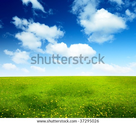 field of spring flowers and perfect cloudy sky