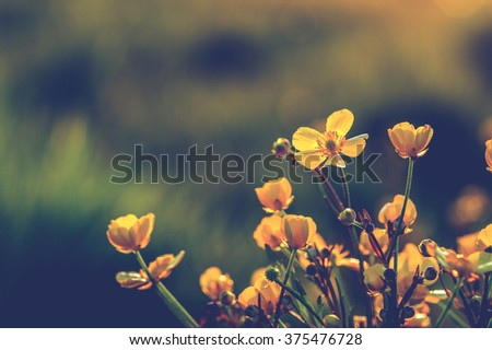 field of spring flowers and sunlight - stock photo