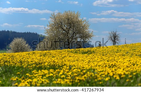 Field of spring flowers dandelions, Dandelion meadow. Yellow dandelion with shallow focus in backgound flowering tree against blue sky. Beautiful countryside - stock photo