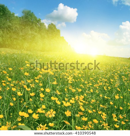 Field of spring flowers, trees, blue sky and sun. - stock photo