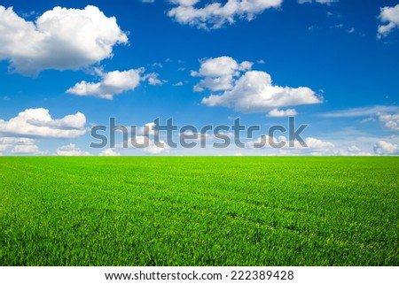 field of spring grass and beautiful sky - stock photo