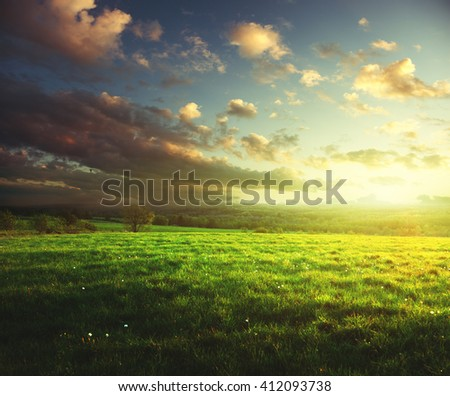 field of spring grass and forest  in sunset time - stock photo