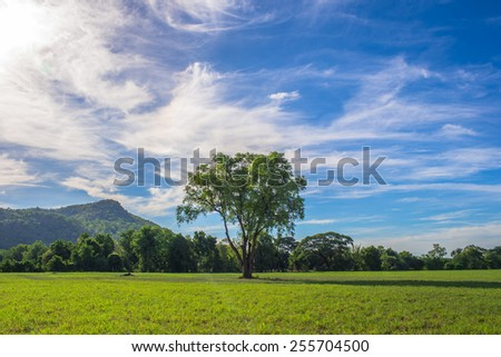 field of spring grass and mountain and lonely tree - stock photo