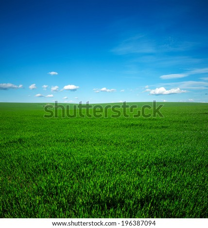Field of summer grass and bright blue sky - stock photo