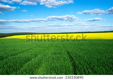 Field of summer grass and bright blue sky