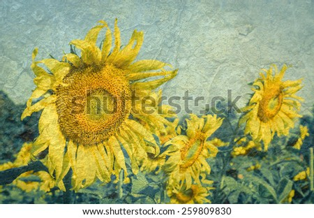 Field of sunflowers on a grunge background with vintage filter - stock photo