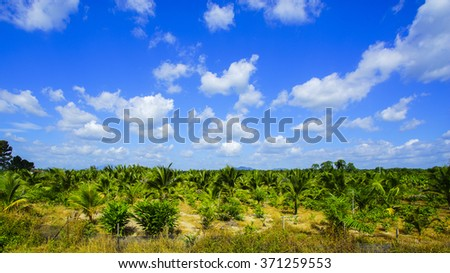Field of tall grass surrounded by coconut trees with beautiful blue sky at background.