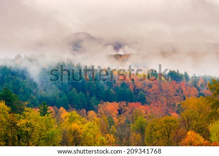 Field of trees during fall foliage, Stowe Vermont, USA - stock photo