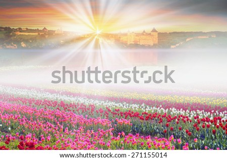 Field of tulips of different breeds on the backdrop of scenic wilderness after rain misty morning  bright spring greens in the mountains in the warm golden rays of sunrise sun-natural beauty  Earth - stock photo